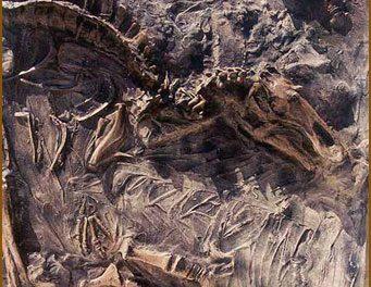 Observação sobre a natureza insatisfatória dos fósseis da série do cavalo, como evidência da evolução(*)