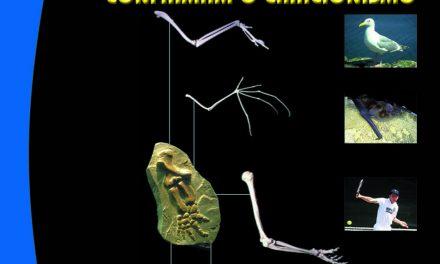 Folha Criacionista Nº. 32 – 1º Semestre de 1985 – Ano 14
