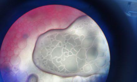 O Microscópio e as Células